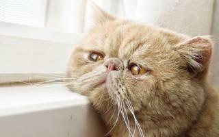 Болезни кастрированных котов