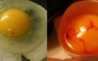 Куриное яйцо с кровью