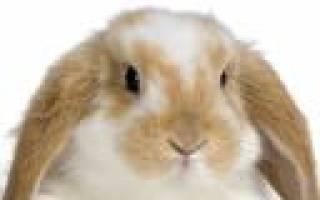 Почему кролик вялый