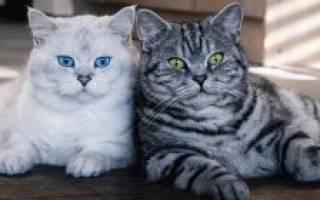 Коты похожие на леопарда