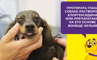 Хлоргексидин для собак