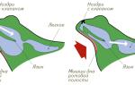 Кровеносная система у земноводных
