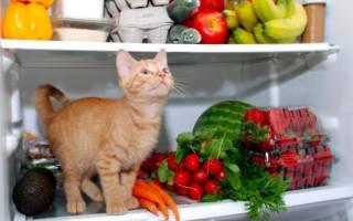 Что приготовить кошке