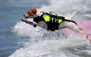 Порода спасательных собак