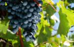 Домашнее вино из молдовы