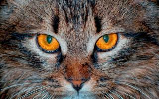 У кота красный глаз