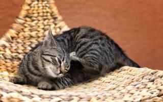 Как отучить котенка писать на кровать