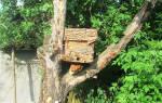 Установка ловушек для пчел