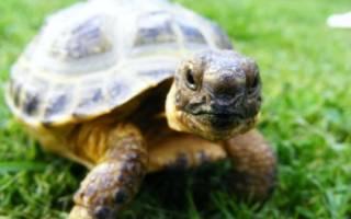 Черепаха перестала есть
