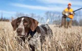Как обучить собаку охоте