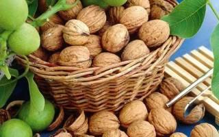 Когда собирать грецкий орех