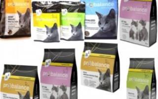 Пробаланс для кошек состав