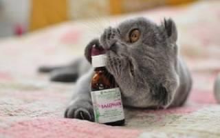 Влияние валерьянки на кошек