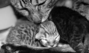 Кошка не может разродиться