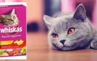 Вискас для кота