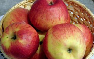Коричное новое яблоня описание