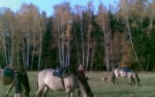 Вятская порода лошадей