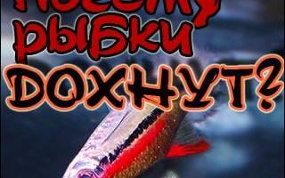 Умирают рыбки в аквариуме