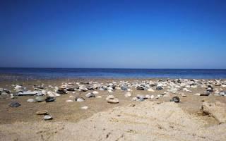 Сообщение о моллюсков