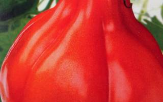 Японский трюфель томат описание