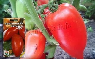 Сибирская тройка томат отзывы