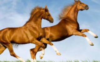 Скорость движения лошади