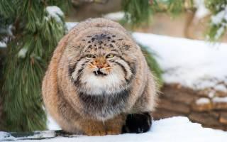 Самое большое животное России