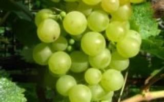 Жемчуг сабо виноград