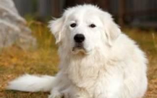 Собаки со спокойным характером
