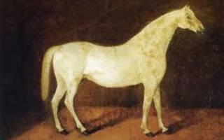 Арабская лошадь цена