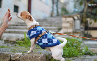 Холистики для собак