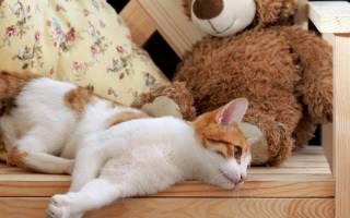 У кошки опухла лапа