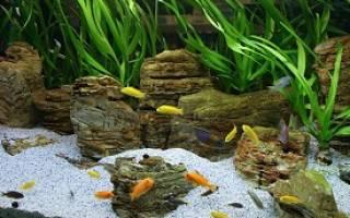 Сколько кипятить грунт для аквариума