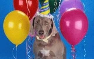 Определение возраста собаки
