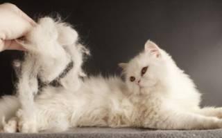 Витамин к для кошек