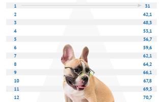 Как у собак считаются года
