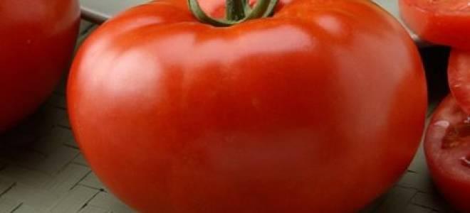 Бугай красный томат