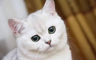 Кошка кал с кровью