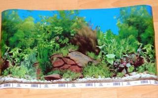 Задний фон в аквариум