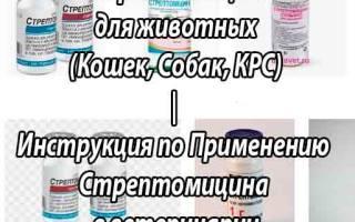 Стрептомицин инструкция для животных