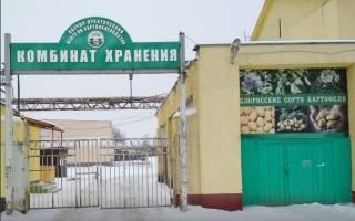 Сорта картофеля из белоруссии