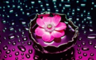 Как посадить кустовую розу?