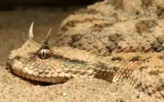 Змея с рогами на голове
