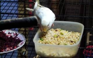 Каши для попугаев