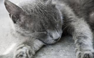Токсоплазмоз как проверить кошку