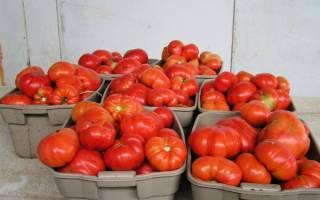 Хлебосольные томаты отзывы фото