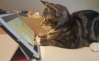 Экран для кошек