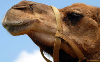 Район верблюдоводства