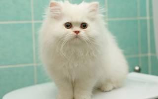Кличка для белого кота