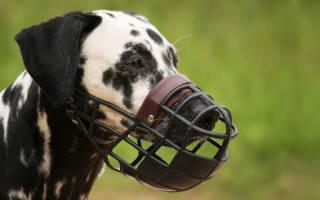 Как одевать намордник собаке